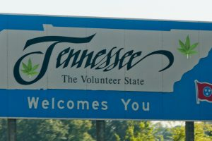 Apparently, Tennessee Suggests You Volunteer to Traffic Drugs to Have Cannabis Oil